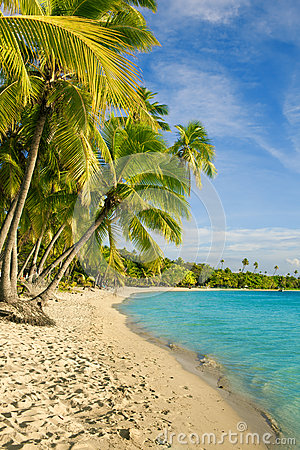 Palm trees over tropical lagoon at Fiji