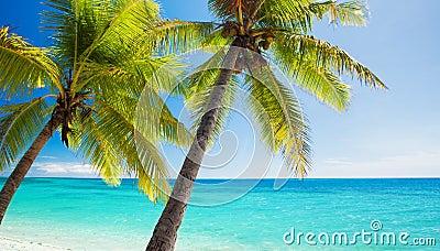 Palm trees overlooking blue lagoon