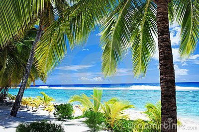 Palm trees overlooking lagoon and beach