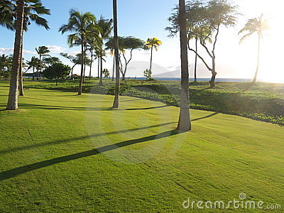 Palm trees on perfect lawn, tropical setting