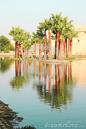Palm trees reflected in water in Morocco