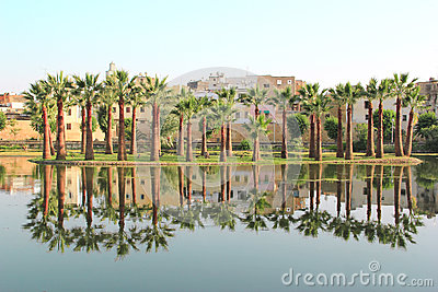 Palm trees reflected in water