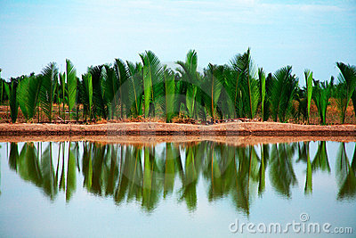 Palm trees reflecting on water