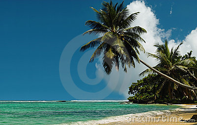 Palm trees on royal beach .