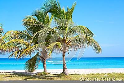 Palm trees in a sandy beach