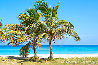 Palm trees in a sandy beach