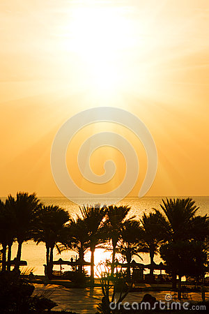 Palm trees and sea at tropical sunset (sunrise)