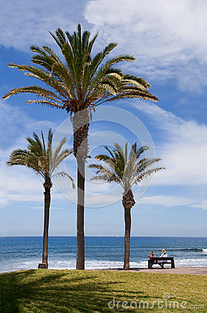 Palm trees at the shore atlantic ocean