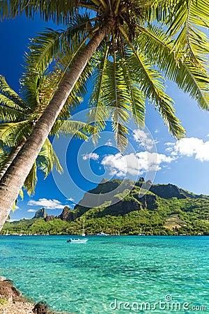 Palm Trees on Shoreline of Ocean at Moorea