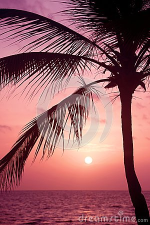 Free Palm Trees Silhouette At Sunset Tropical Beach. Orange Sunset. Stock Photo - 113075290