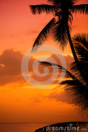 Free Palm Trees Silhouette At Sunset Tropical Beach. Orange Sunset. Stock Photos - 97659733