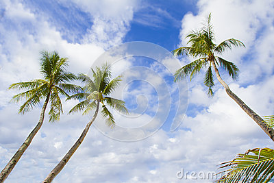 Palm trees on sky