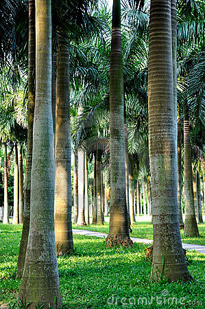 Palm trees in sun shine, vertically