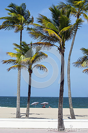 Palm trees and sunbathers on the beach
