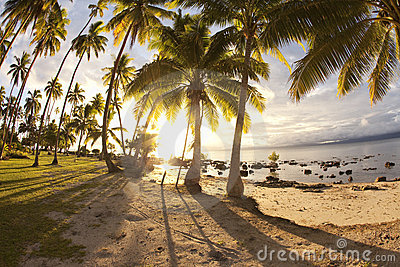 Palm trees at sunrise, Fiji