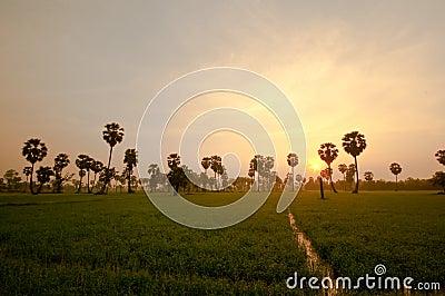 Palm trees sunrise golden blue sky backlight