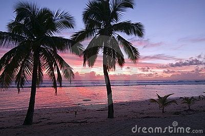 Palm Trees at Sunset on a Tropical Beach