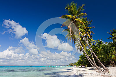 Palm Trees On The Tropical Beach Royalty Free Stock Photo - Image: 25696775