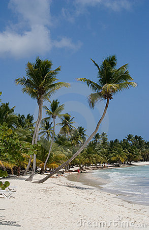 Palm Trees On A Tropical Beach Stock Photo - Image: 2722350