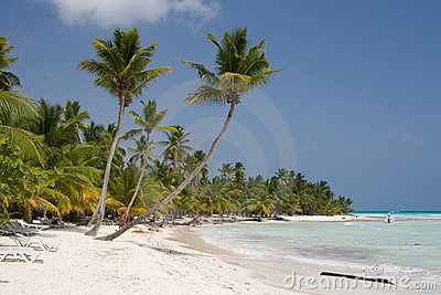 Palm trees on a tropical beach