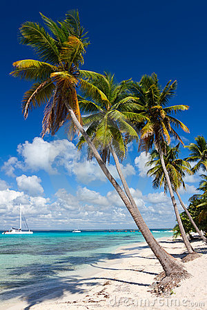 Palm trees on the tropical beach, Caribbean Sea