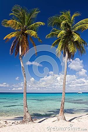 Palm trees on the tropical beach, Caribbean Sea