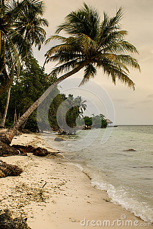 Palm trees on tropical beach in the colombia,America Sur
