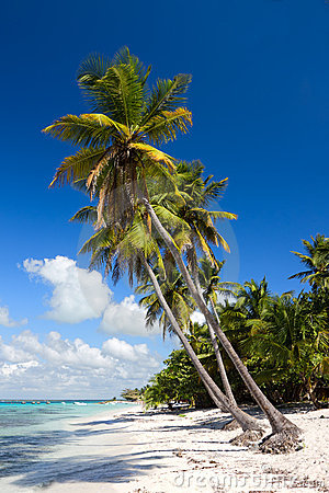 Palm trees on the tropical beach, Dominican Rep