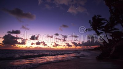 Palm trees on the tropical beach at sunrise, video. Palm trees on the tropical lonely beach at sunrise, video stock video footage