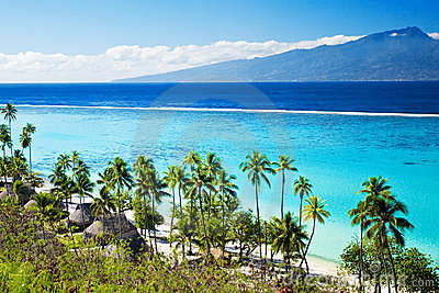 Palm trees on tropical beach in tahiti