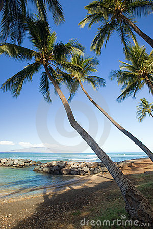 Palm Trees by Tropical Lagoon