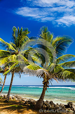 Palm Trees and Turquoise Water