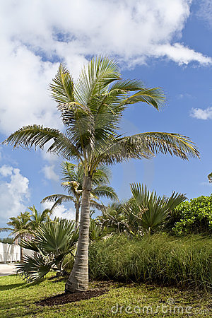 Palm trees and vegetation