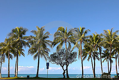 Palm trees at Waikiki Beach, Hawaii