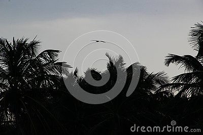 Palm trees and white sandy beach at the sunset in Caribbeans Stock Photo