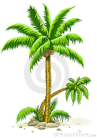 Free Palm Trees With Coconut Fruits Royalty Free Stock Photos - 10644748