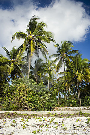 Palm trees on Zanzibar island