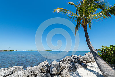 Palm at the tropical beach