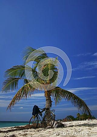 Palm on the tropical beach