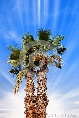 Palm under blue sky