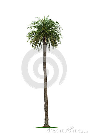 Palm On White Background Royalty Free Stock Image - Image: 26582076