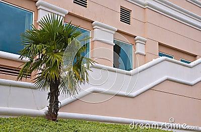 Palm by a Zigzag Railing