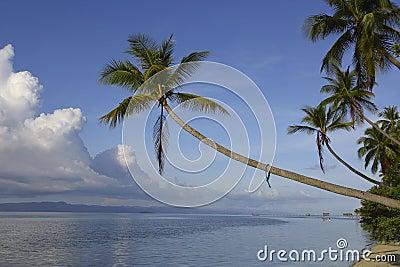 Palma de coco tropical de la isla del paraíso