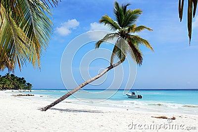 Palma del paraíso