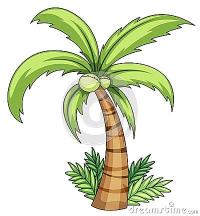 Palma di noce di cocco fotografia stock immagine 24833470 - Palma di cocco ...