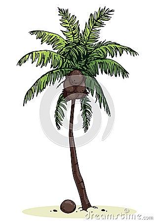 Palma di noce di cocco immagine stock immagine 25963461 - Palma di cocco ...