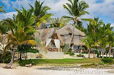 Palma e spiaggia tropicale nel paradiso tropicale. Estate holyday nella Repubblica dominicana, Seychelles, i Caraibi, Filippine, B