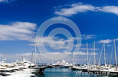 Palma marina Editorial Photo