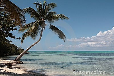 Palma sulla spiaggia caraibica