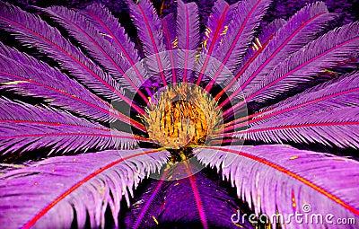 Palma tropical do pesadelo
